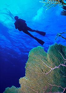 Buceo en Gran Caimán, Islas Caimán
