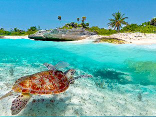 A turtle swimming in crystal clear water at the beach.